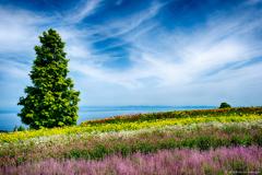 天空の花園