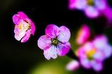 春の色、み~つけた!