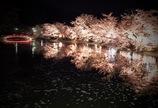 夜桜舞う・・・