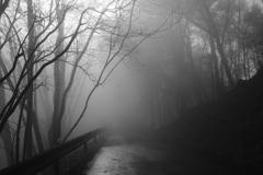 霧の山道 その2