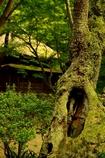 古木と古民家