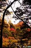 庭園の彩飾