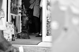 猫のお店のネコ