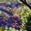 風は 秋色 ♪