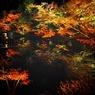 紅葉♤高台寺