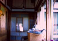 CONTAX 139で撮影した(花と廊下)の写真(画像)