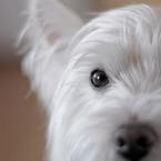 LUCKY@犬