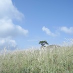Hmasakazu
