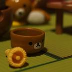 赤い小松菜~猫