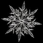 Marine-Snow